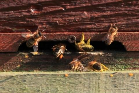 Bardsey pollen