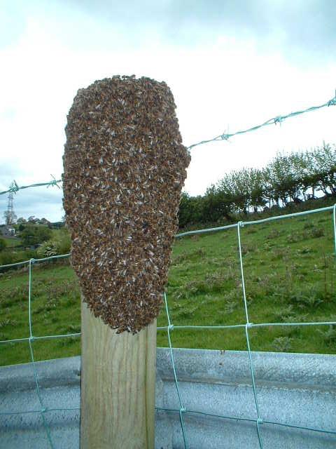 Swarm on fence post