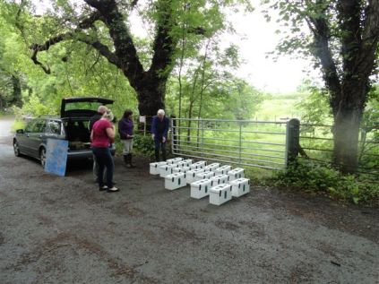 Nucs for new beekeepers