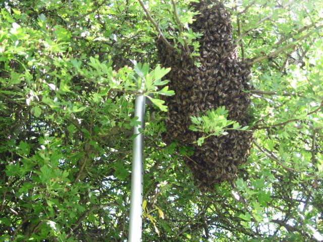 swarm, july 2011