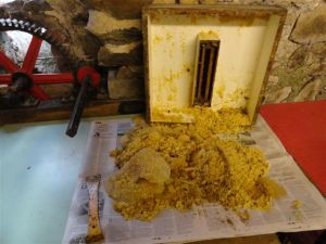 1. Dry, clean cappings awaiting sorting