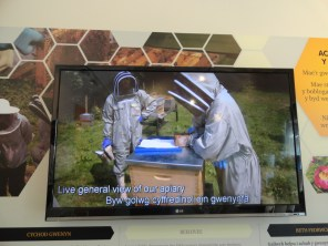 Live video of Bee Inspectors at work at Bees Wales apiary