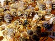 2018 wasp attack by bees