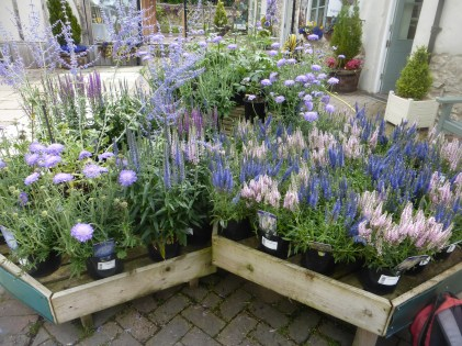 Pollinator friendly plants at Bodnant Garden Centre