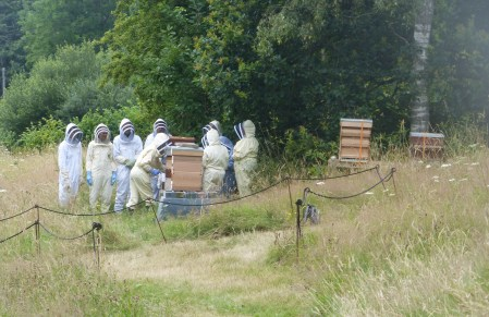 Beekeeping with the Bodnant bees