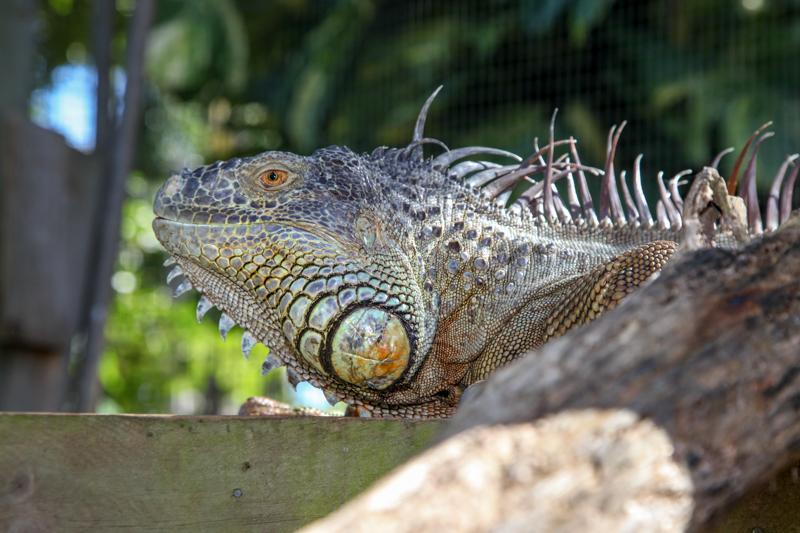 cooberrie-park-wildlife-sanctuary-100