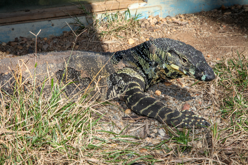 cooberrie-park-wildlife-sanctuary-107