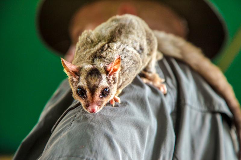 cooberrie-park-wildlife-sanctuary-27