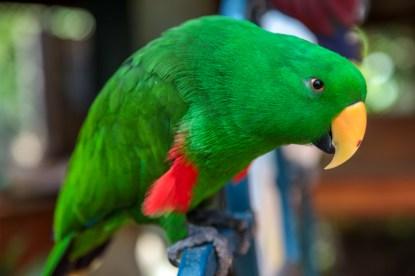 cooberrie-park-wildlife-sanctuary-3
