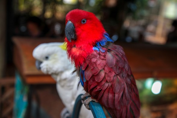 cooberrie-park-wildlife-sanctuary-5