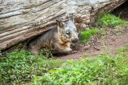 cooberrie-park-wildlife-sanctuary-96