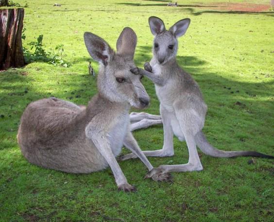 cooberrie-park-wildlife-sanctuary