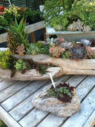 Awesome Succulent Garden Ideas In Your Backyard 15