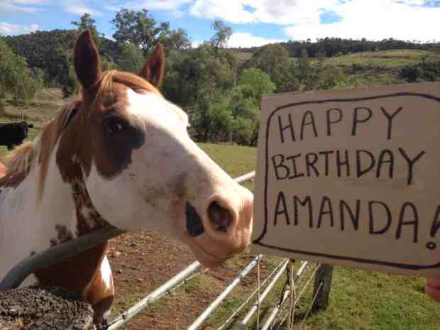 Happy Birthday Horse