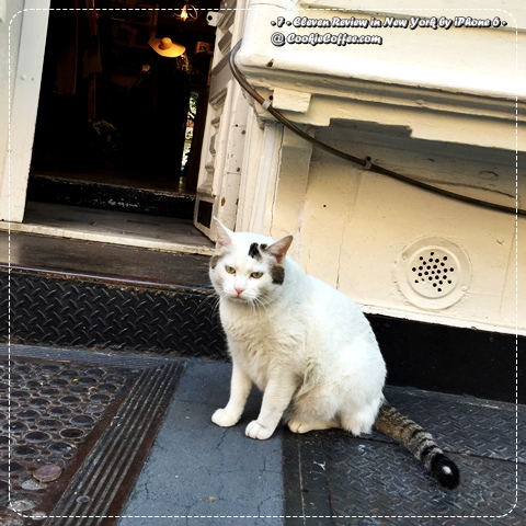 new-york-cat-homeless-white-fat-angry-unfriendly-iphone-6-plus