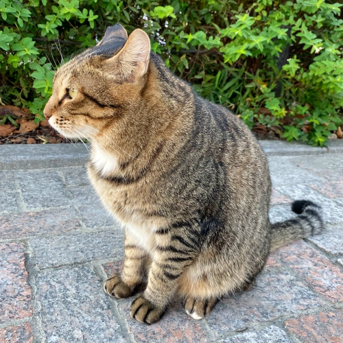 japan-tokyo-homeless-stray-fat-cat-despair-see-asakusa-sumida-river-iphone-11-pro-max-camera-review