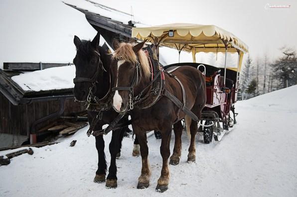 pferdeschlittenfahrt katschberg