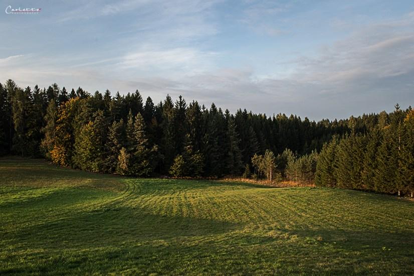 Wald mit Wiesen und Bäumen, Rezepte für Unterwegs