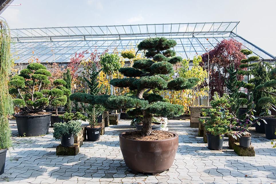 Pflanzen für Terrassengarten