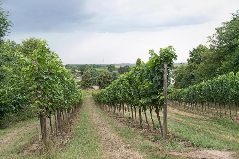 Österreich Wein Weingut Fritsch_1429