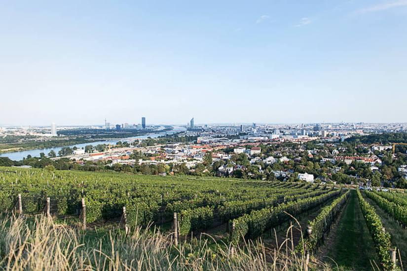 Österreich Wein Wieninger_2144
