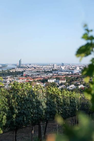 Österreich Wein Wieninger_2173