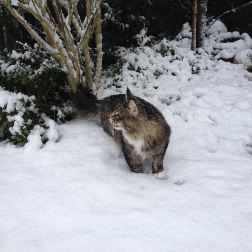 Loki sneeuw By Cookingdom