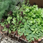 Grow a Kitchen Herb Garden to Save Money