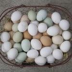 Passover Egg Noodles