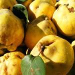yellow quinces