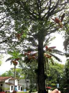 foam bees in trees