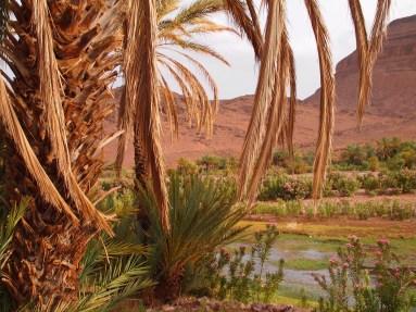 Oasis vegetation