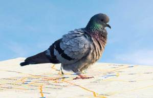 Google Pigeon Smacks Down the Little Guy In Local Rankings