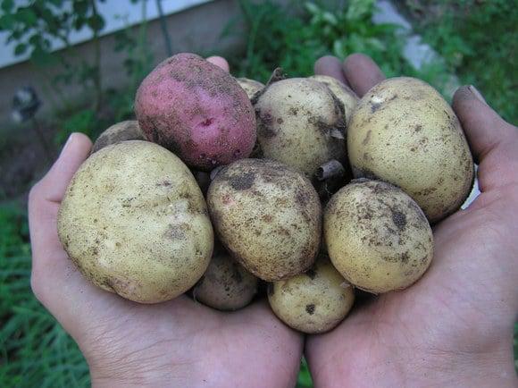Potato-Eggplant curry