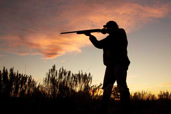 silhouette of hunter with gun - image