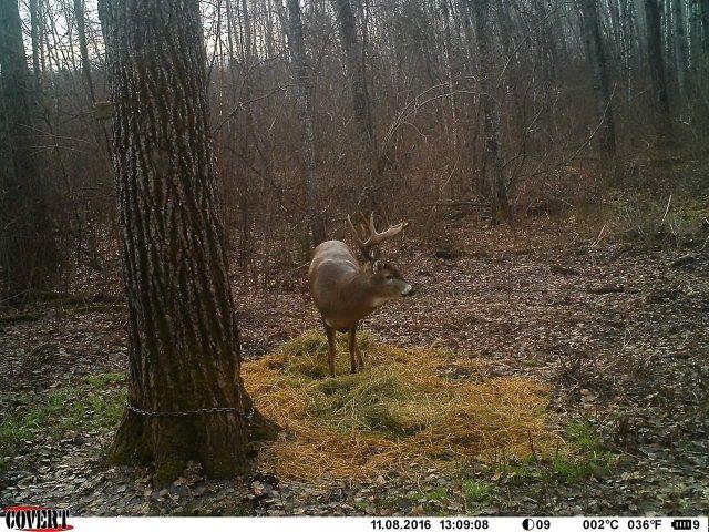 whitetail deer hunt - images