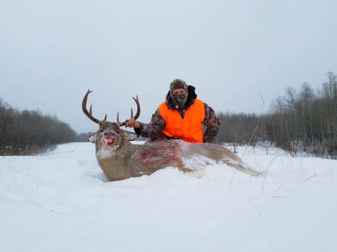 huge deer - image