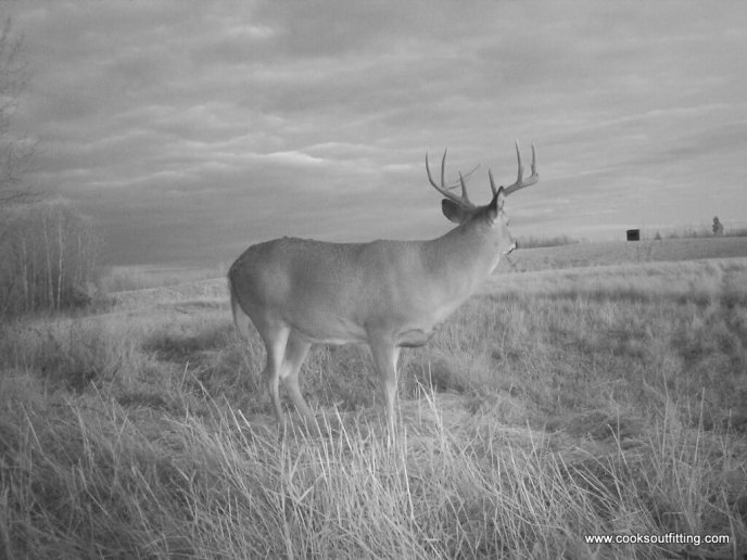trail cam white tail deer - image
