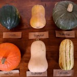 Winter Squash Guide & Taste Test
