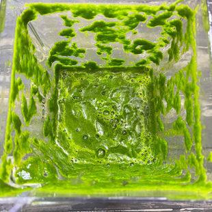 green color paste in a blender