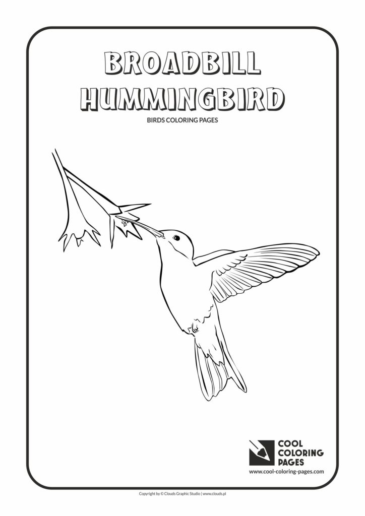 Cool Coloring Pages Broadbill hummingbird coloring page