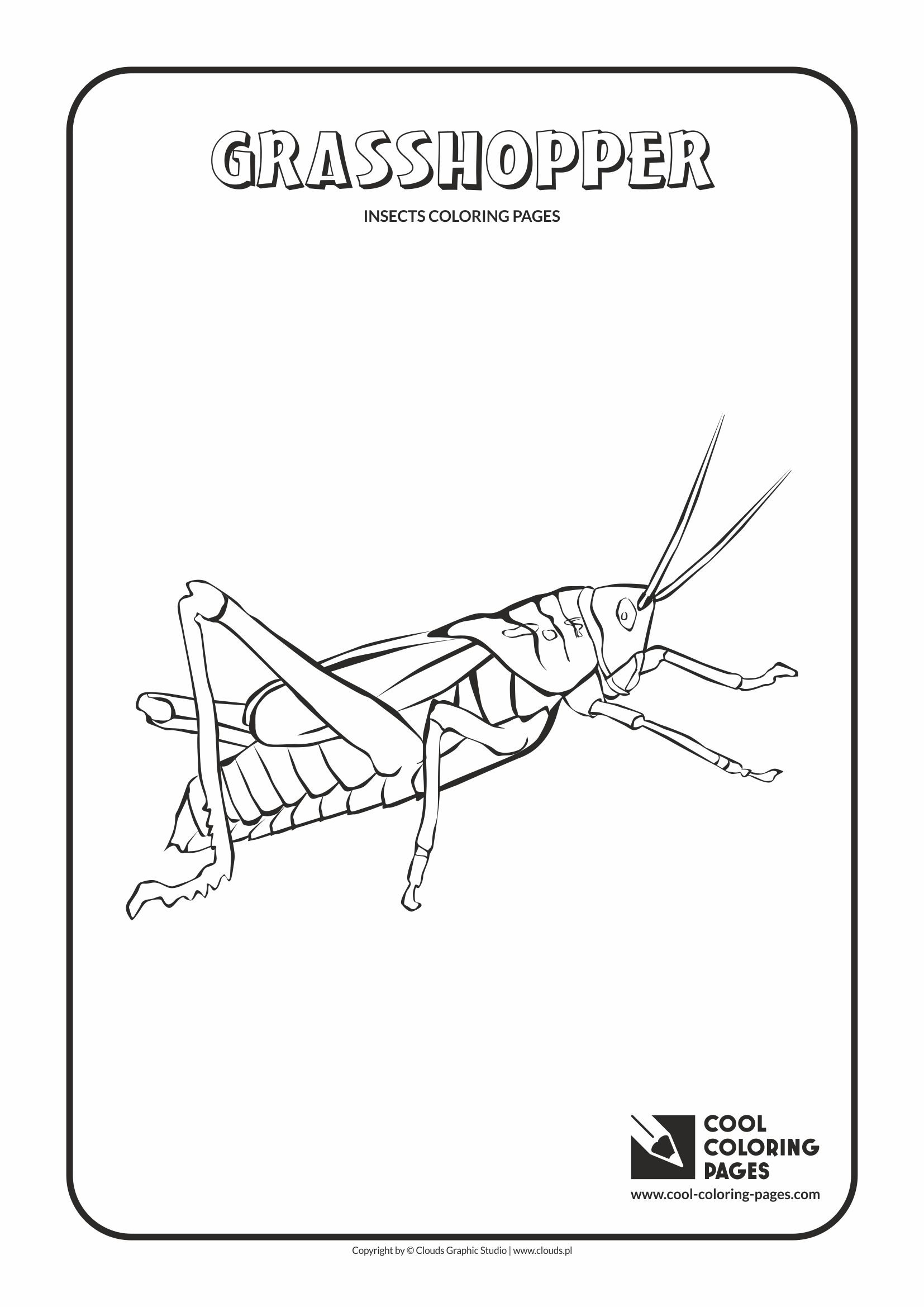grasshopper insect diagram mercury 115 wiring cockroach life cycle sketch coloring page