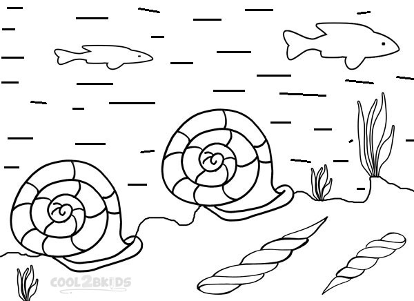 Printable Seashell Coloring Pages For Kids Cool2bKids