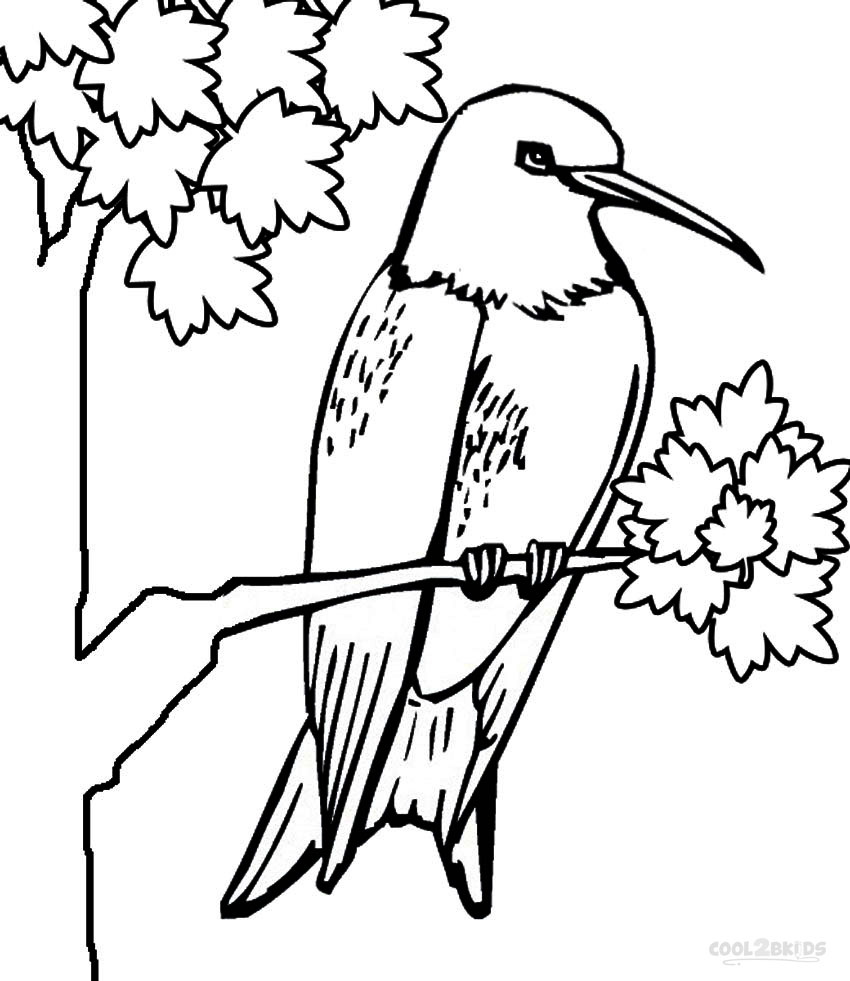 Printable Hummingbird Coloring Pages For Kids