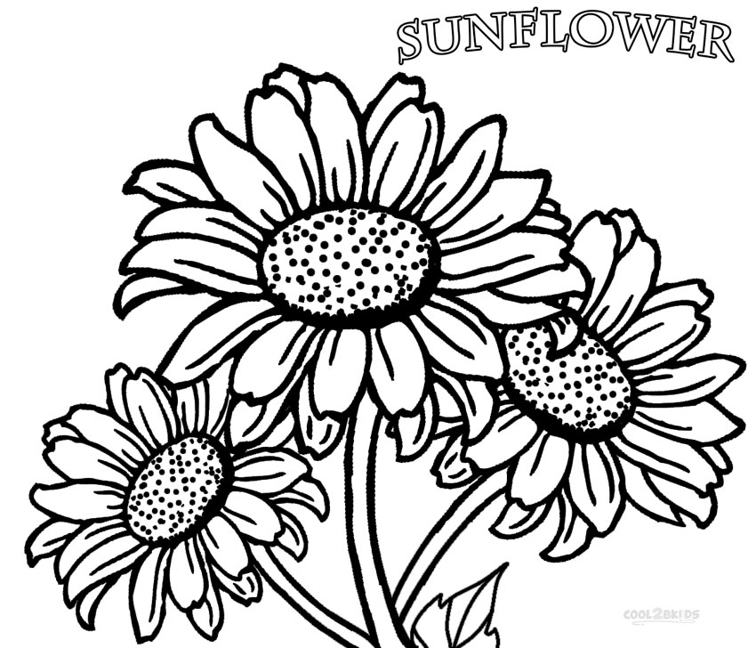 Sunflower Field Coloring Pages Coloring Pages