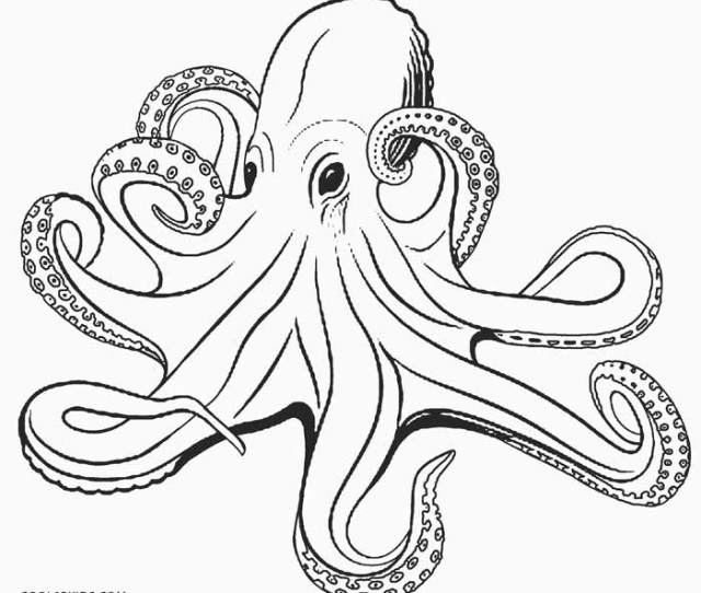 Printable Octopus Coloring Page For Kids Coolbkids