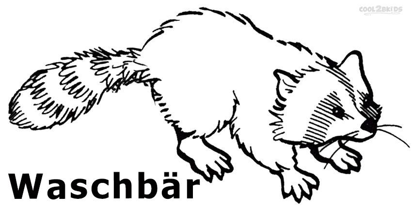 Ausmalbilder Waschbär - Malvorlagen kostenlos zum ausdrucken