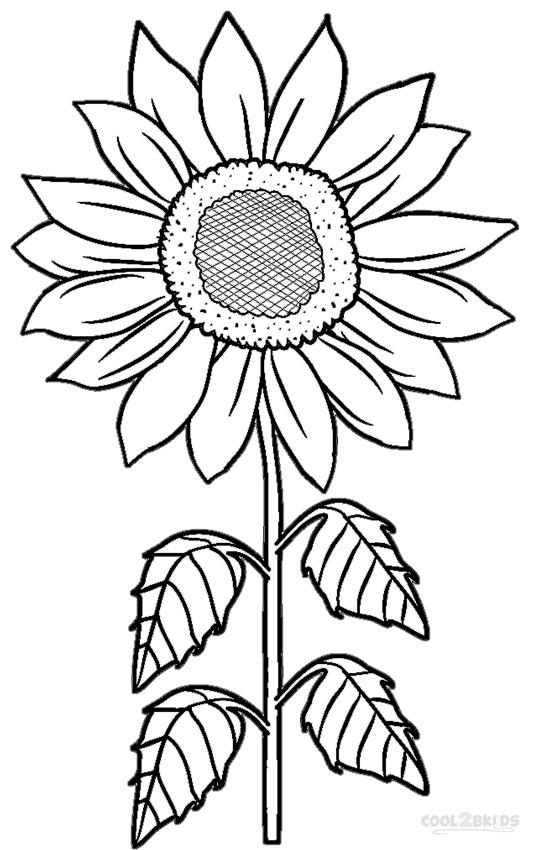 Ausmalbilder Sonnenblumen - Malvorlagen kostenlos zum