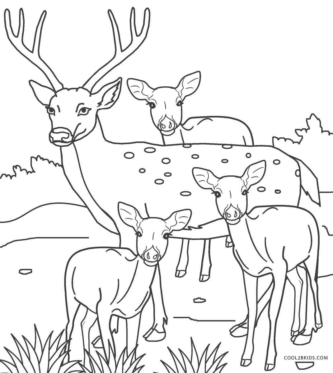 Ausmalbilder Hirsch - Malvorlagen kostenlos zum ausdrucken