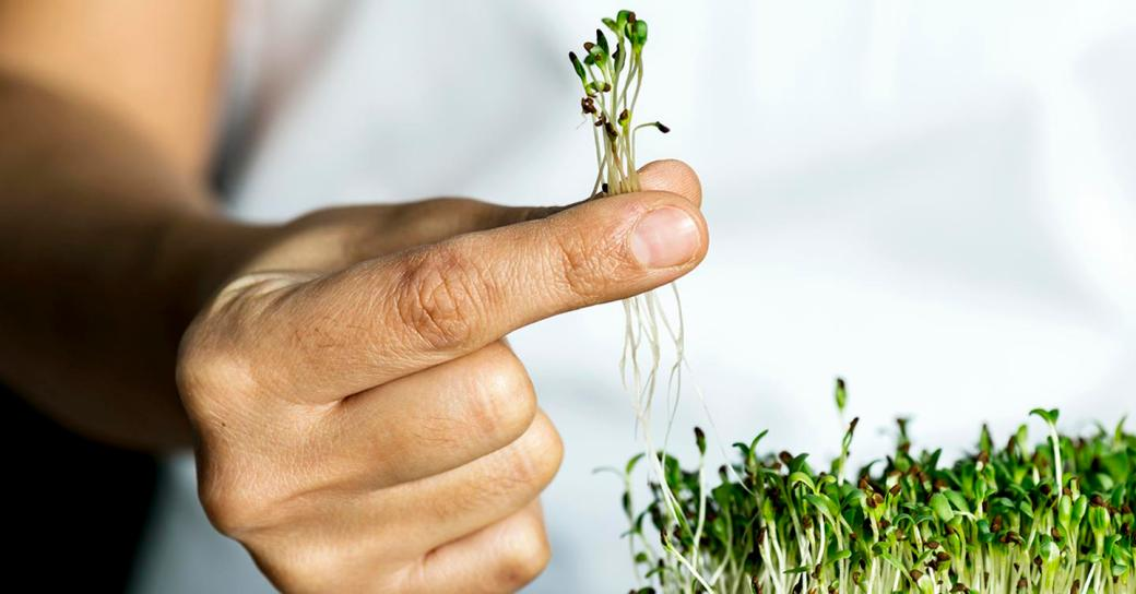 CoolBusinessIdeas.com | Growing Your Own Microgreens
